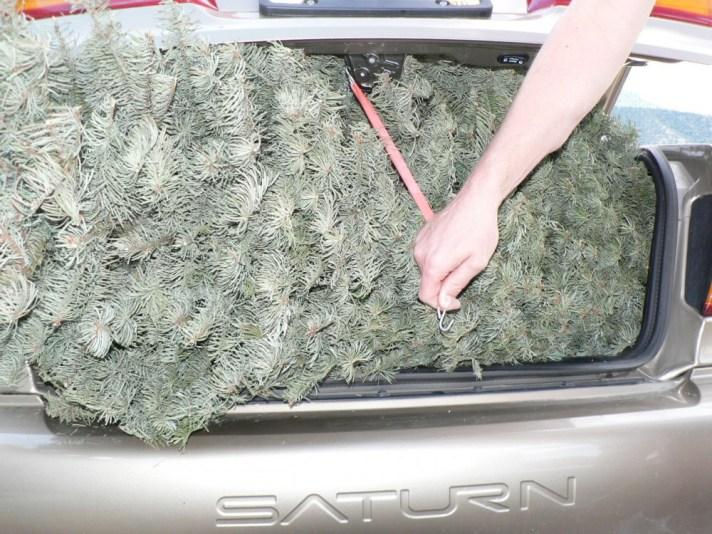 trunk_tie