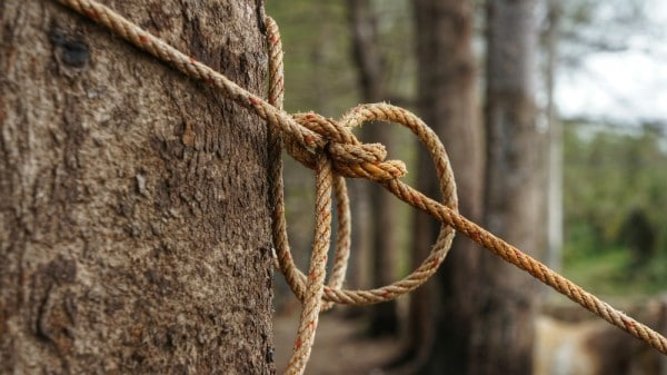 Tying a Rope to Chop a Tree Down