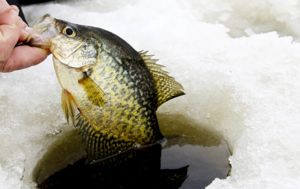 Ice Fishing Hole Size for Species