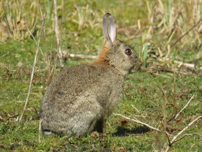 IMG_9452 Rabbit (Custom)
