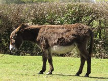 IMG_0992 donkey