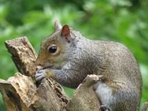 IMG_3297 squirrel