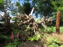 IMG_7595 Sizergh castle gardens