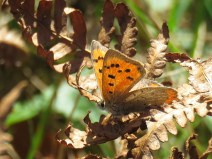 img_0139-small-copper