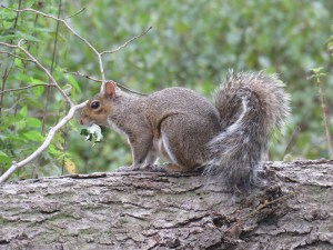 img_0339-squirell
