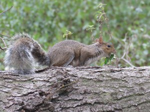 img_0341-squirell