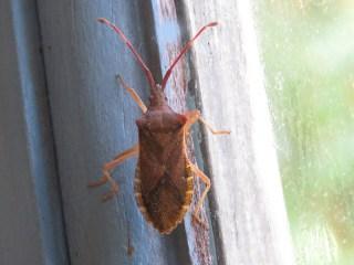 img_9696-box-bug