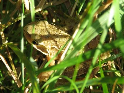 img_9781-frog