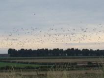 img_1270-gulls