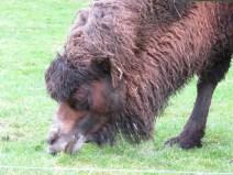 img_1954-camel