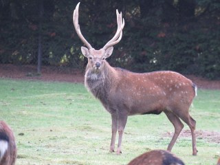 img_2040-stag