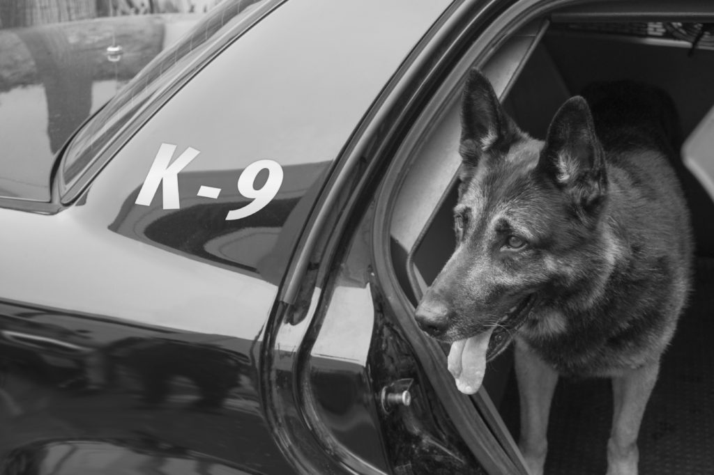 Officer and K9 injured in wild Miami car chase