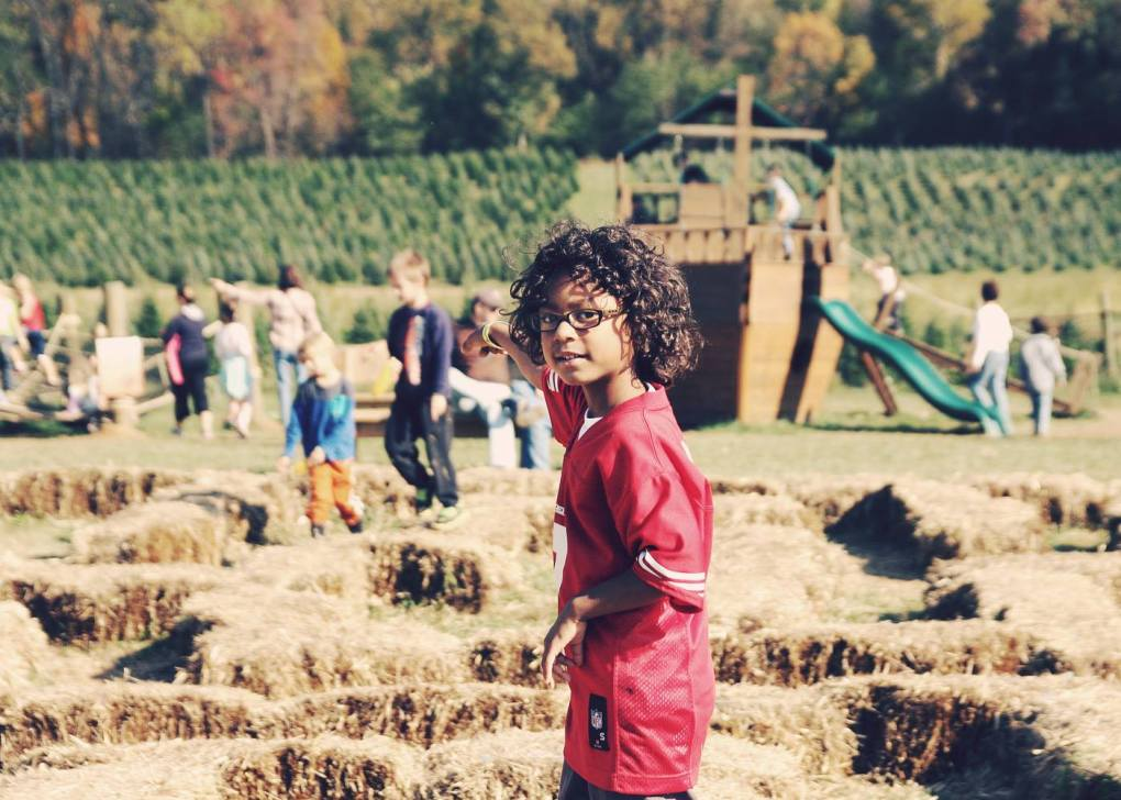 Fun Fall Activities To Try Nearby - Gaver Farm