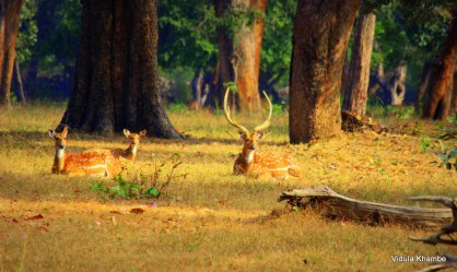 Family of deers njoing morning