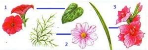 Узнаем растения по их частям