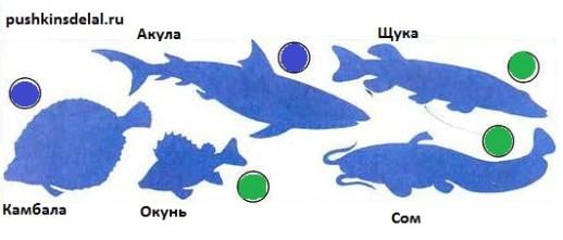 Узнай рыб по силуэтам. Какие из них речные, а какие — морские?