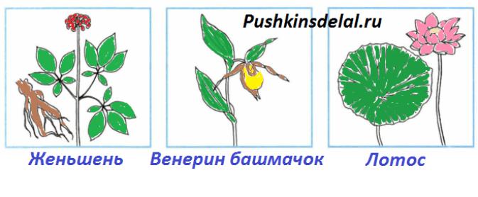 раскрась растения из Красной книги и подпиши их названия