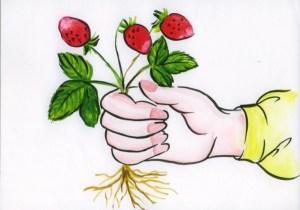 схема человек рвет землянику