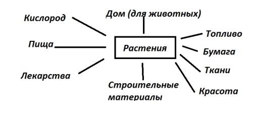 схема что дают растения животным и человеку