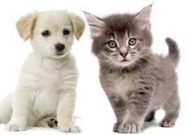 TOP 100 Nama Kucing dan Anjing versi VPI  Namafbcom