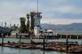 Les otaries du Pier 39