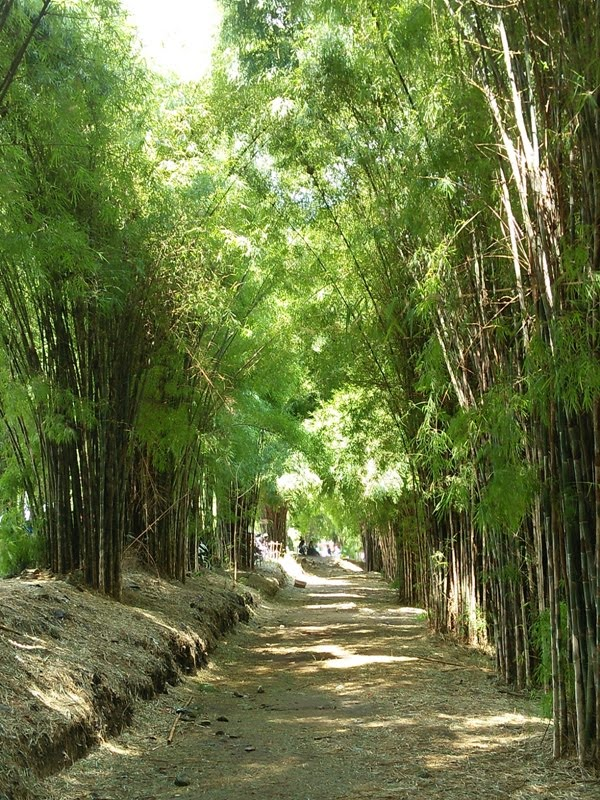 Hutan Bambu Surabaya : hutan, bambu, surabaya, Lihat, Hutan, Bambu, Keputih, Dengan, Mobil, Surabaya|, Putera, Mentari