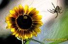 Foto-48d-(07)c-Spinnen