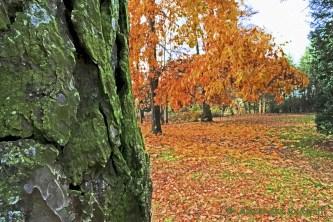 foto-68d-19-jpg-blatter-im-park