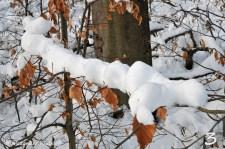 foto-70h-12-schneewesen