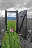 foto-65b-68-freundschaft