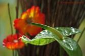 Foto-71c-(76)-dasPflanzenrätsel
