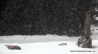 snowing_02272014