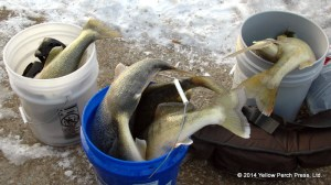 Put in Bay Fresh Fish
