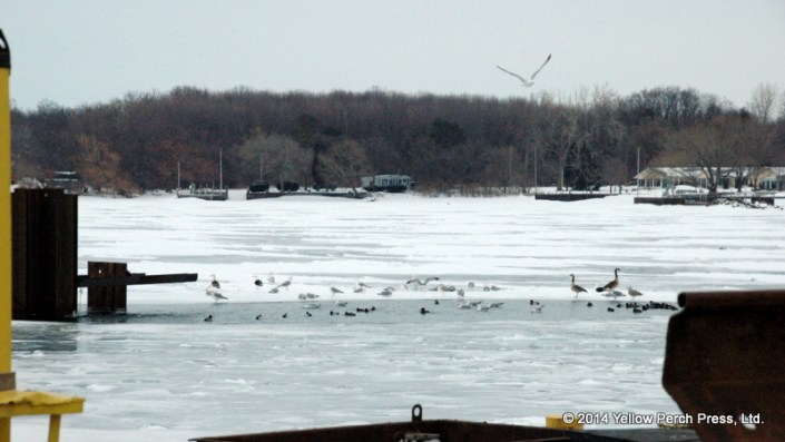 Ice Party Put in Bay