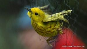 birding net