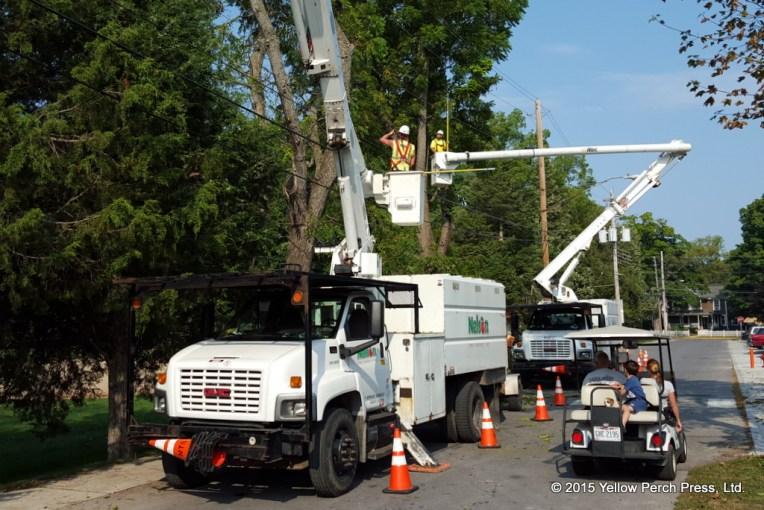 tree service_09032015