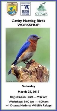 Otttawa County Ohio birding