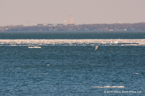 Lake Erie ice floe