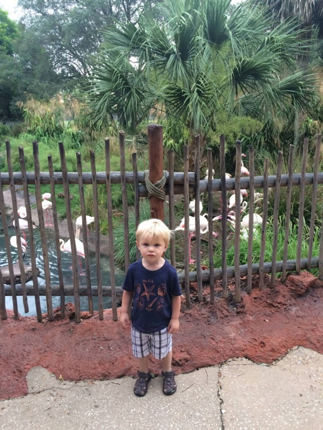 Disney's Animal Kingdom Lodge Animals