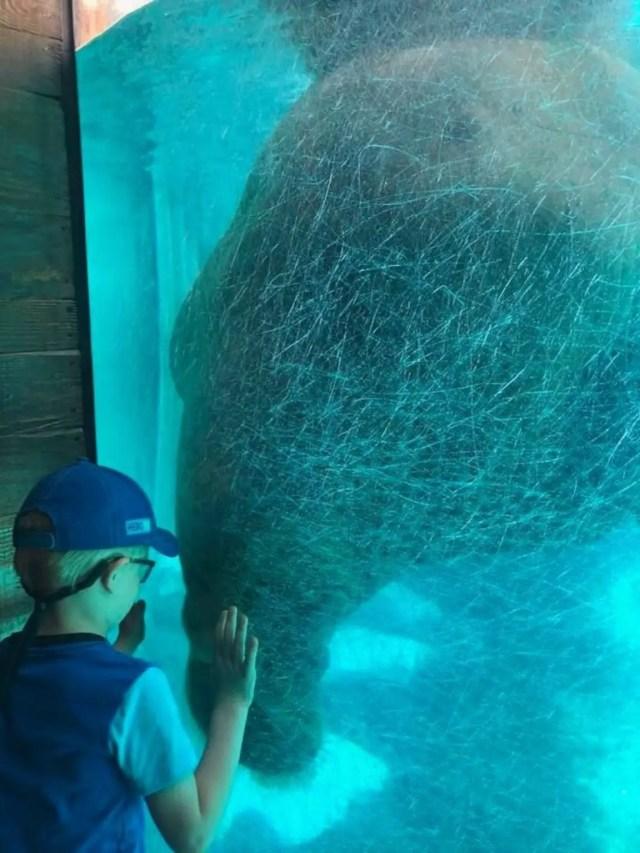 SeaWorld San Diego Walrus