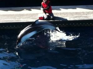 Hannah the dolphin