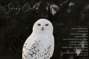 snowy owl, wisdom from within, owl medicine, prophecy, see through illusion