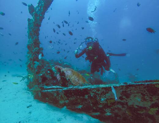Diver above a sea turtle in a shipwreck