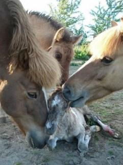 cria de caballos con su familia
