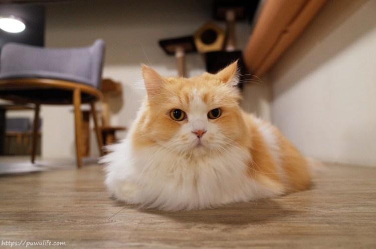 【和貓咪有約】松山區。崩潰可愛!貓奴必訪不限時咖啡廳♥(捷運南京三民站)