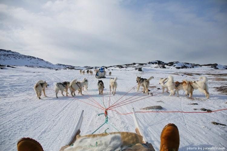 【北緯69度】格陵蘭伊盧利薩特.冬季限定狗拉雪橇(Dog Sledding)