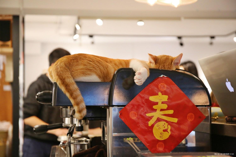 【貓圖咖啡】大安區。師大平價不限時貓咪咖啡 x 香蕉拿鐵好喝♥