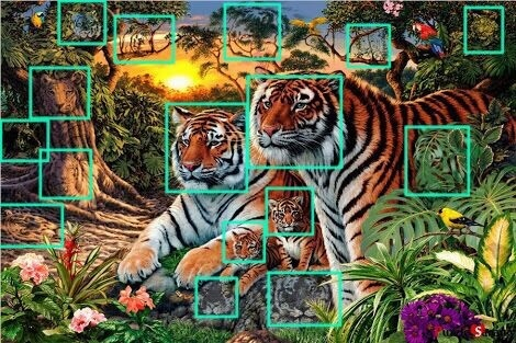 how many tigers answer