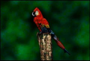 parrot, kingfisher on log puzzle