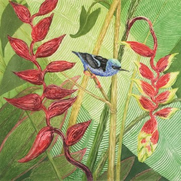 "Red-legged Honeycreeper by Anita Heckman, Monotype 12"" x 12"""